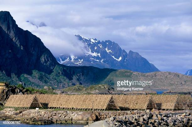Norway Lofoten Islands Svolvaer Codfish Being Dried On Racks