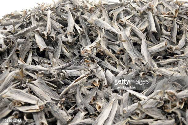 Norway Troms Havnnes Air dried Stockfish cod heads primarily for West Africa principally Nigeria where they are used in soup