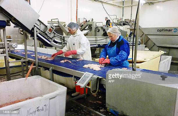 NorwayfishenvironmentlifestyleFEATURE by Nina Larson Workers gutts migrating and spawning eastArctic cod or Skrei of the old Norse term for 'the...