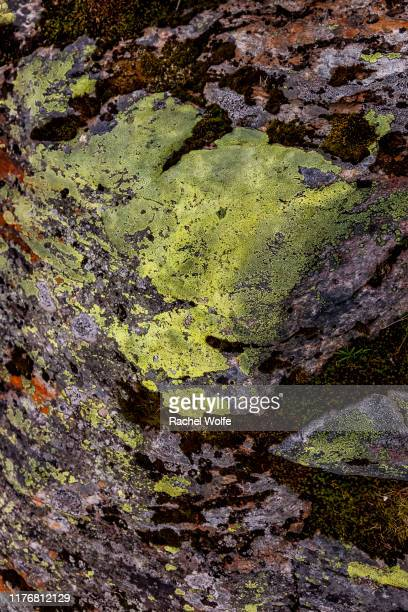 norwegian moss - rachel wolfe stock pictures, royalty-free photos & images