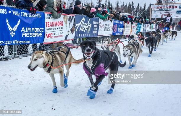 Norwegian rookie Thomas Waemer's at the start of the 2015 Iditarod Sled Dog Race in Fairbanks Alaska 09 March 2015 Photo Scott Chesney/dpa | usage...
