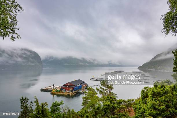 norwegian salmon farm - norwegian culture stock pictures, royalty-free photos & images