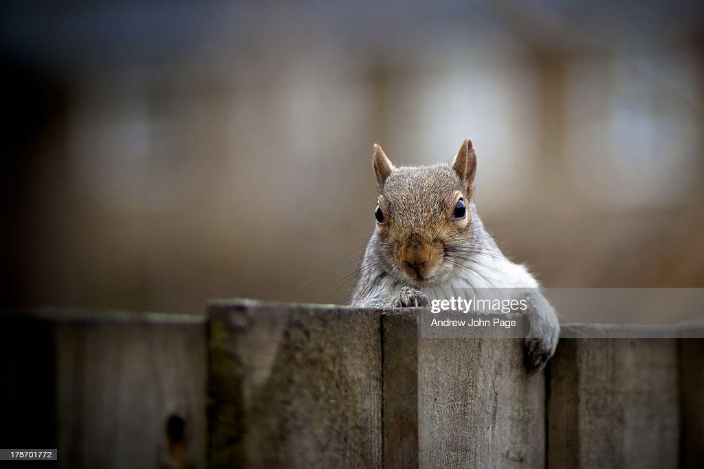 Nosey Neighbour : Foto de stock