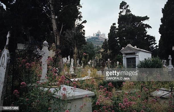 Nostalgia Of Algeria Alger juillet 1972 Le cimetière de SAINTEUGENE envahi par la végétation et en arrièreplan la basilique NotreDame d'Afrique