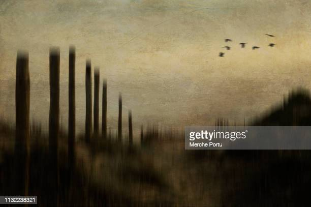 nostalgic and artistic landscapes with textures - calm before the storm stock pictures, royalty-free photos & images