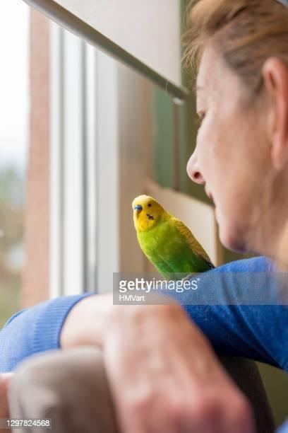 femme nostalgique avec son budgerigar mignon d'animal familier regardant par la fenêtre - un seul animal photos et images de collection