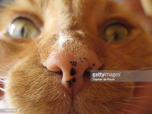 nosy cat - stephan de prouw stock pictures, royalty-free photos & images