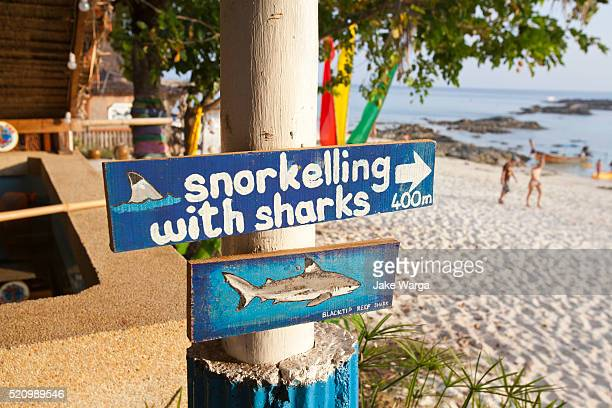 not a great idea, ko phi-phi island, thailand - jake warga stock pictures, royalty-free photos & images