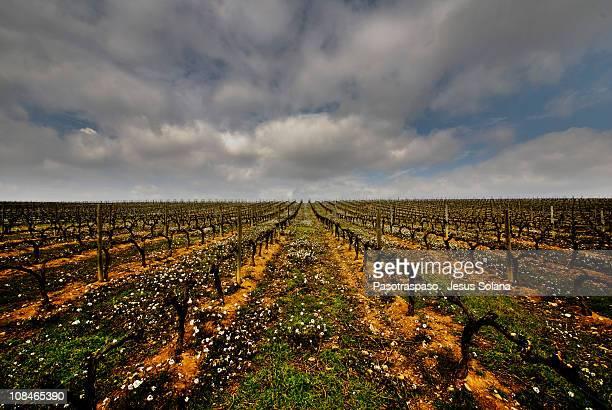 Not defined Rioja / Rioja it infinitely