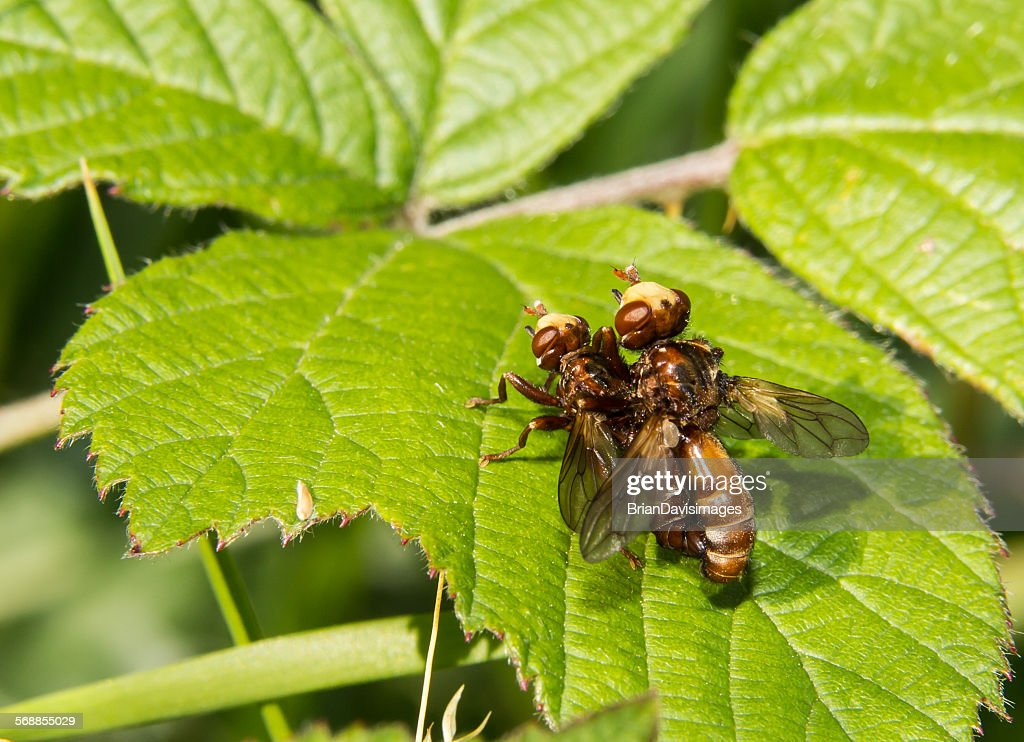Not just the birds and the bees : Stock Photo