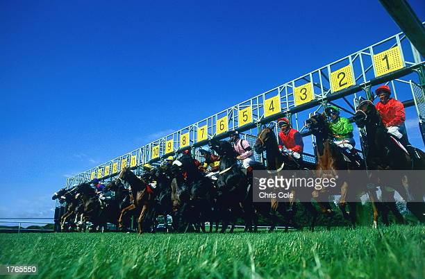 Horse racing jockeys leaving starting gates low angle view