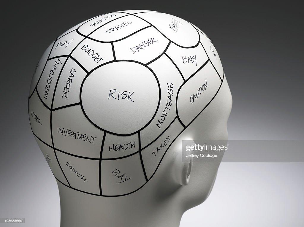 Notated Phrenolgy Head : Stock Photo
