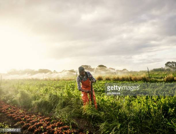 nothing but pure organic goodness - irrigation equipment stock pictures, royalty-free photos & images