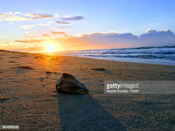 Nothing could be sweeter than Sunrises and Seashells at the Shore!