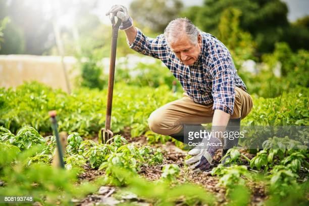 Niets houdt zich bezig met de zintuigen als tuinieren