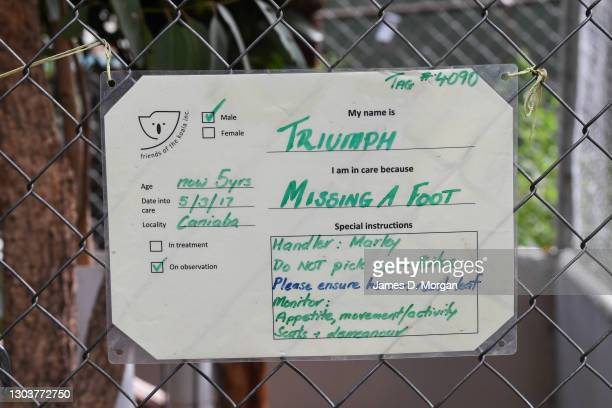 Notice outside the enclosure for Triumph the koala at the Friends of the Koala head office on February 24, 2021 in Lismore, Australia. Triumph the...