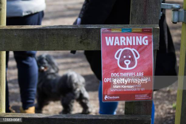 Notice warning visitors to Denham Country Park that dog thieves have been reported in the area is pictured on 13th February 2021 in Denham, United...