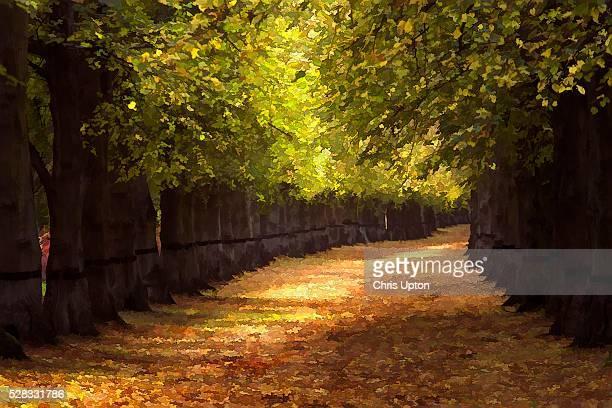 Nottinghamshire, England, UK, Lime Tree Avenue