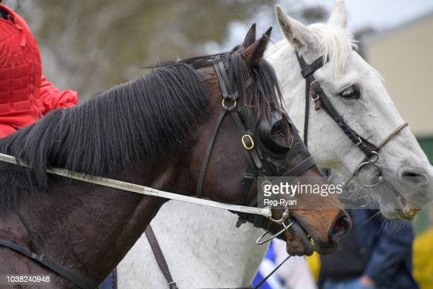 Noumea after winning the Bet365 Coleraine Cup at Coleraine Racecourse on September 23 2018 in Coleraine Australia