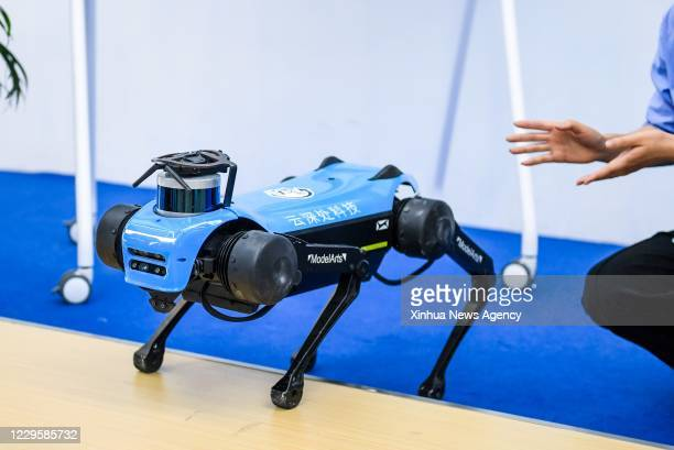 Nov. 11, 2020 -- A robotic dog is seen at the 22nd China Hi-Tech Fair held in Shenzhen, south China's Guangdong Province, Nov. 11, 2020. The 22nd...