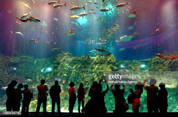 BEIJING Nov 19 2018 Tourists watch fish in the Ocean Park in Hong Kong south China May 29 2012 China is slated to become world's largest theme park...
