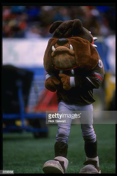 The Cleveland Browns mascot looks on during a game against the Houston Oilers at Cleveland Stadium in Cleveland Ohio The Oilers won the game 3710...