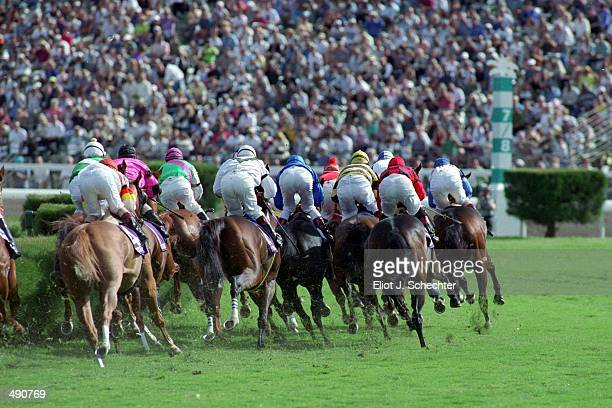 A general view of the Horses as they round the first turn in the Breeders Classic during the Breeders Cup at Gulf Stream Park in Hallandale Beach...