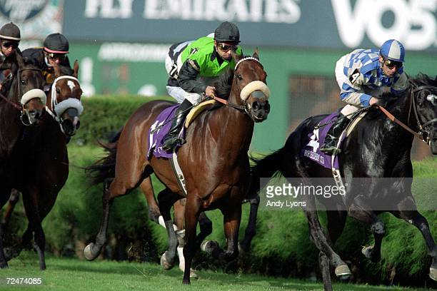 Anguilla strides down the track in the Filly and Mare Turf during the Breeders Cup at the Gulfstream Park in Hallandale Beach Florida Mandatory...