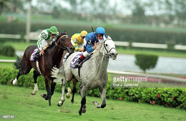 Daylami runs down the stretch with Frankie Dattori in the Turf during the Breeders Cup at Gulf Stream Park in Hallandale Beach Florida Mandatory...