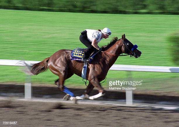 General Challenge is in action during the Breeders Cup training at the Gulfstream Park in Hallandale Beach Florida Mandatory Credit Matthew Stockman...