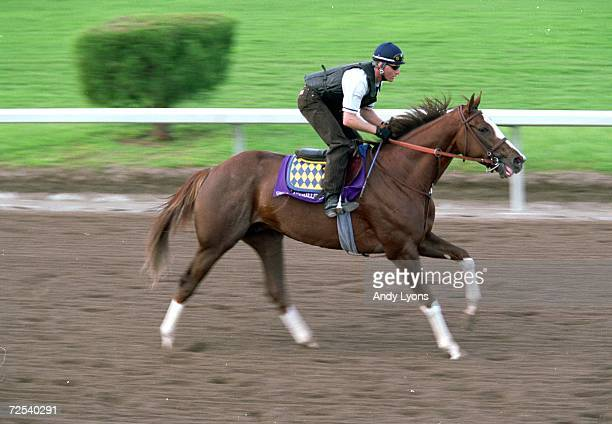 General Challenge runs on the track during the Breeders Cup training at the Gulfstream Park in Hallandale Beach Florida Mandatory Credit Andy Lyons...
