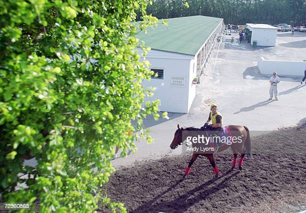 Lemon Drop Kidd walks to the track during the early morning training before the Breeders Cup at the Gulfstream Park in Hallandale Beach Florida
