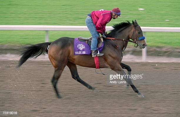 Silic runs on the track during the Breeders Cup training at the Gulfstream Park in Hallandale Beach Florida Mandatory Credit Andy Lyons /Allsport