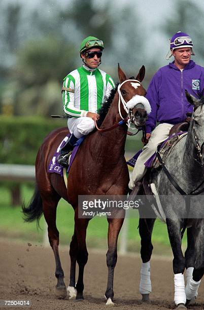 Spain ridden by Gary Stevens walks on the track in the Juvenile Fillies during the Breeders Cup at the Gulfstream Park in Hallandale Beach Florida...