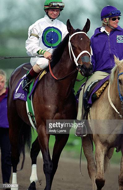 Surfside ridden by Pat Day walks on the track before the Juvenile Fillies during the Breeders Cup at the Gulfstream Park in Hallandale Beach Florida...