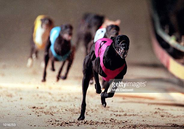 The Schweppes Melbourne Cup greyhound race is won by Kantarn Bale trained at Lara by Graeme Bate The race was held at Sandown Park Melbourne...