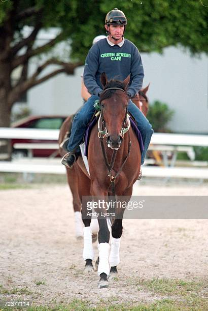 Vision and Verse walk during the Breeders Cup training at the Gulfstream Park in Hallandale Beach Florida Mandatory Credit Andy Lyons /Allsport
