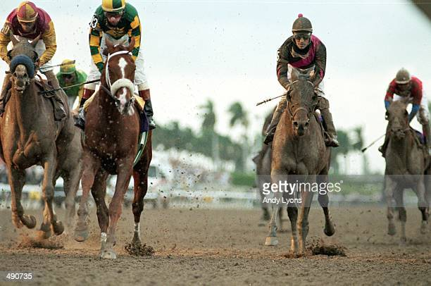 Visions and Verse runs down the strech with Gary Stevens in the Breeders Classic during the Breeders Cup at Gulf Stream Park in Hallandale Beach...