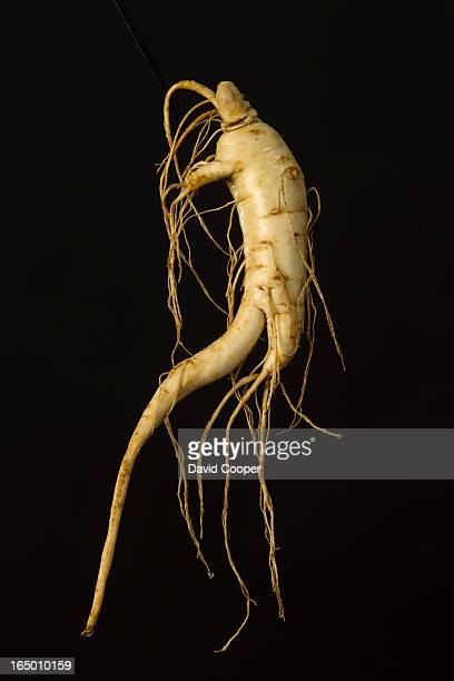 from lore to the lab We follow the story of ginseng a root used as a remedy for everything from fatigue to low sex drive for thousands of years With...