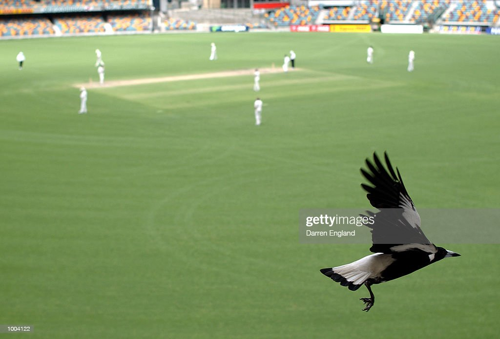 A local Magpie watchers the action from the grandstand during the New Zealand versus Queensland cricket match played at the Gabba in Brisbane, Australia. The match is part of the New Zealand team's tour of Australia. DIGITAL IMAGE. Mandatory Credit: Darren England/ALLSPORT