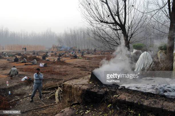 Nov 27 2018 Srinagar Jammu And Kashmir India Kashmiri workers peel off the bark of boiled withies used in making firepot in the outskirts of Srinagar...