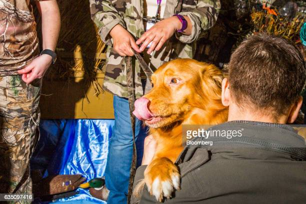 A Nova Scotia Duck Tolling Retriever dog greets an attendee during the annual Meet the Breed event ahead of the 141st Westminster Kennel Club Dog...