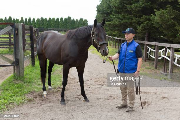 Novellist at Shadai Stallion Station in Hokkaido Japan on August 31 2015 Novellist is the winner of the King George VI and Queen Elizabeth Stakes 2013