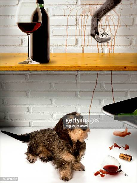 November 06 2006 Madrid Spain Photomontage of a pedigreed dog teckel observing the play unfolded by a monkey in the kitchen