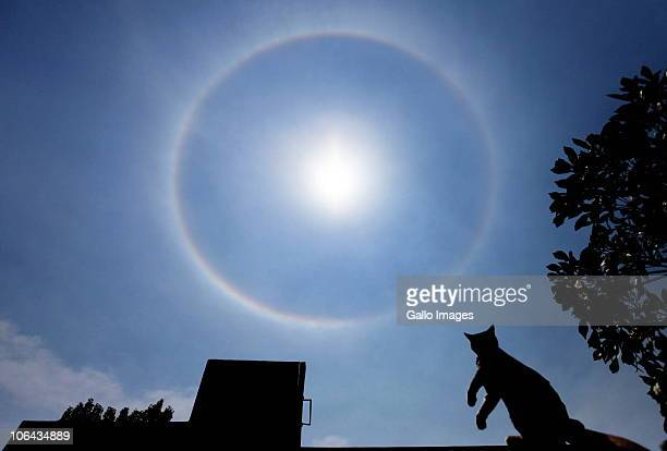 AFRICA November 1 A cat stares at the ring around the sun South Africans were surprised to see a rainbow wrapped around the sun almost like a halo at...