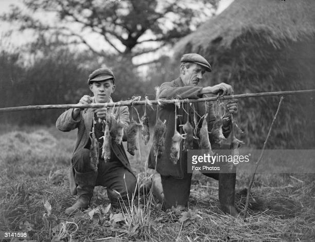 Couple of Hampshire rat catchers string up a row of dead rats by their tails.