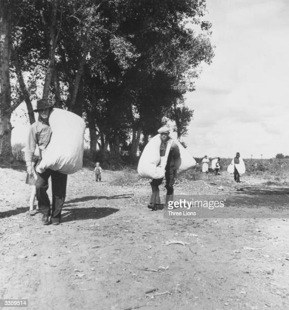 Pickers leaving the fields at noontime in a small cotton farm in Kern county California