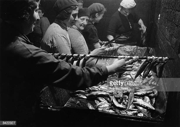 Women sorting and preparing the herring catch at Yarmouth Original Publication Picture Post 3027 Yarmouth Herring Girls unpub
