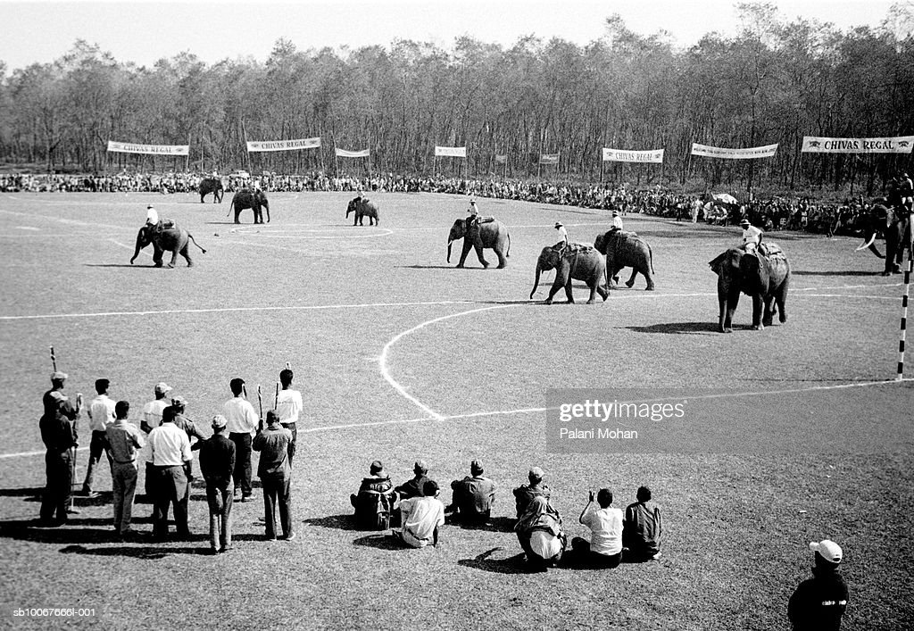November 2002. The World Elephant Polo is played by teams from all around the world December 2002 at Chitwan National Park, Nepal. There are now less than 50,000 Asian elephants, both living in the wild and in captivity; a tiny number compared to their 600,000-strong African cousins. Some of the region's elephants still labour in jungle logging camps, alongside mahouts whose craft has been handed down through the generations. But with most nations having banned timber-felling, thousands of other beasts and their handlers have had to find another way to earn their living.