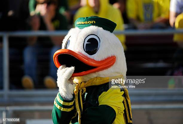 Oregon mascot watches game as the Stanford Cardinal defeated the Oregon Ducks 5142 in a Pac10 Conference game at Stanford Stadium Stanford California